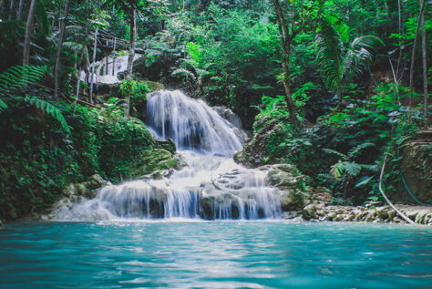 Tropical waterfall surrounded by trees