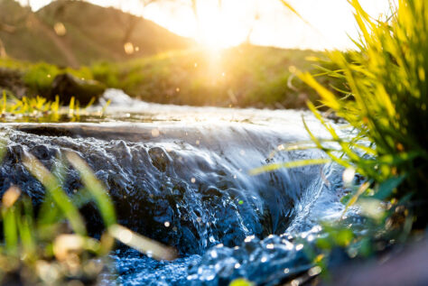 Small waterfall near grassy plants with sunlight in background